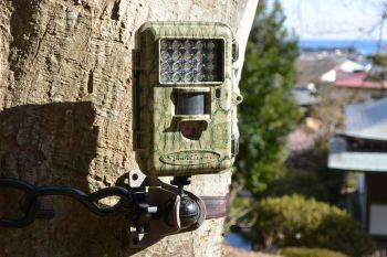 自動撮影カメラTREL(トレル) 10J-C