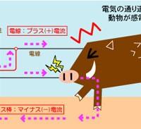 イノシシ_電気柵