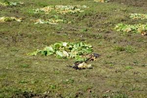 捨てられた野菜