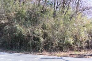 生い茂る草木