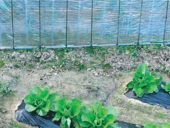 イノシシに掘り返された畑
