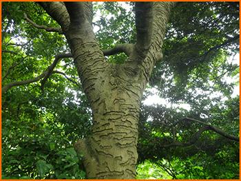 タイワンリスの画像 p1_19
