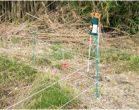 キツネ被害対策用電気柵
