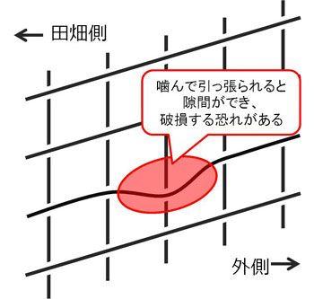 ワイヤーメッシュ設置の向き1