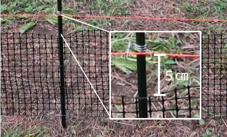 ネットと 電気柵ワイヤーの間は5cm