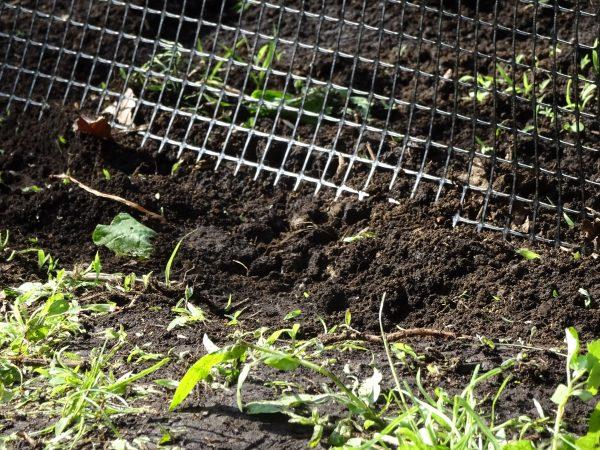 畑側に軽く土寄せを行う