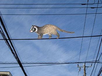 電線を渡るハクビシンのイメージ